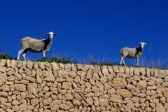 Lambs. Posing on stones on the farm Royalty Free Stock Photo