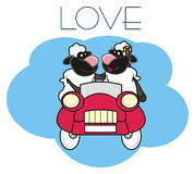 Lambs couples in love in the car Royalty Free Stock Photo