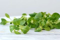 Lambs lettuce on the wooden background stock photos