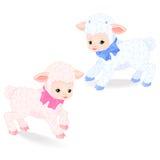lambs little Royaltyfri Fotografi
