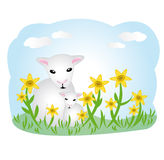 Lambs on meadow Royalty Free Stock Photo