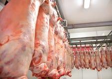 Lambs  row Royalty Free Stock Image