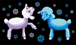 Lambs Stock Image