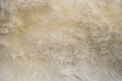 Lambs wool Stock Photo