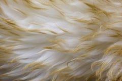 Lambskin - Pelzhintergrund mit einem gewellten Profil lizenzfreies stockbild