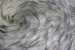 Lambskin - Pelzhintergrund mit einem Turbulenzmuster stockfoto