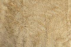 Lambswool na żywym baranku Zdjęcie Royalty Free