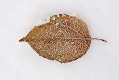 Lame congelée sur la neige photo stock