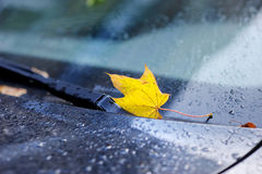 Lame d'érable d'automne Image stock