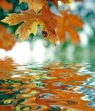 Lame d'érable d'octobre Atumn Image stock