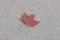 Lame d'érable sur l'asphalte Photographie stock
