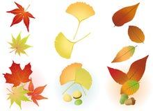 Lame d'automne : Érable, Ginkgo, gland Image libre de droits