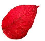 Lame d'automne Photo libre de droits