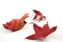 Lame d'automne Images libres de droits