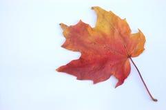 Lame d'automne photos stock