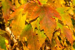 Lame d'automne Image libre de droits