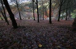 Lame d'automne Photographie stock