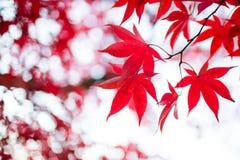 Lame d'automne photographie stock libre de droits
