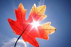 Lame d'automne Photos libres de droits