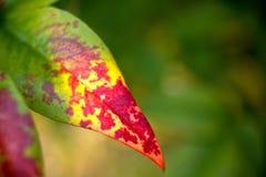 Lame d'automne images stock
