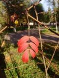 Lame d'automne Image stock