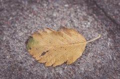 Lame d'automne photo stock