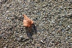 Lame d'automne au sol Photo libre de droits