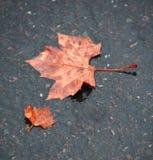 Lame d'automne au sol après la pluie Photos stock