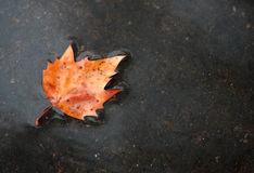 Lame d'automne au sol après la pluie Photographie stock