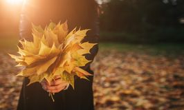Lame d'automne Feuilles d'automne en parc Photo stock