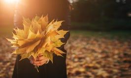Lame d'automne Feuilles d'automne en parc Photos libres de droits