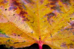 lame d'automne humide Feuille multicolore Lame humide Photos libres de droits
