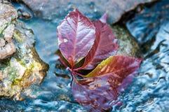 Lame d'automne sur l'eau Image libre de droits