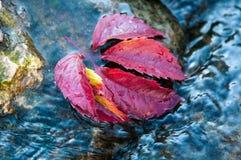 Lame d'automne sur l'eau Photos stock