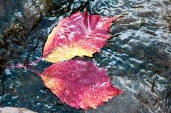 Lame d'automne sur l'eau Image stock