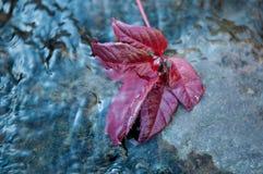 Lame d'automne sur l'eau Images stock