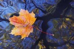 Lame d'automne sur l'eau photo libre de droits