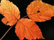 Lame d'automne sur le fond brouillé Image stock