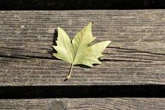 Lame d'automne sur le fond en bois image libre de droits
