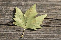 Lame d'automne sur le fond en bois photo libre de droits