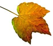 lame d'isolement par automne Photos stock