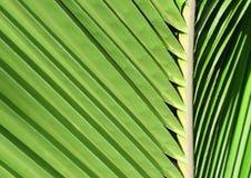 Lame d'un palmier Image stock