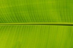 Lame de banane image libre de droits