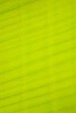 lame de banane Photographie stock