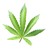 Lame de cannabis Photos stock