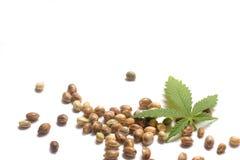 Lame de cannabis avec des graines Photographie stock libre de droits