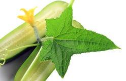 Lame de concombre Image stock