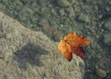 lame de fond d'automne images libres de droits