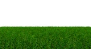 Lame de l'herbe verte fraîche - d'isolement sur le fond blanc - 3D I Photo stock