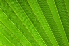 Lame de palmier Image libre de droits